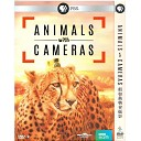 假如動物會攝影 Animals with Cameras (2018) DVD